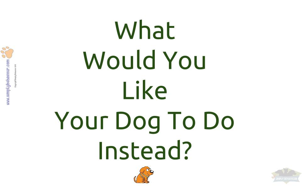 what would you like your dog to do instead