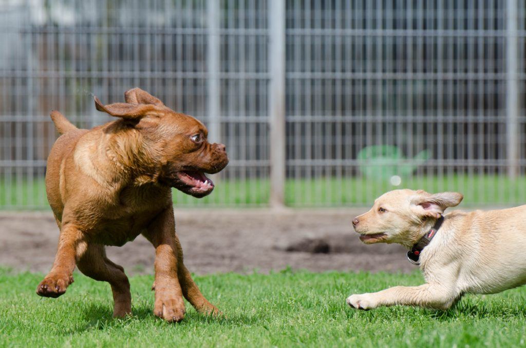 Dog Training And Behaviour Online Courses