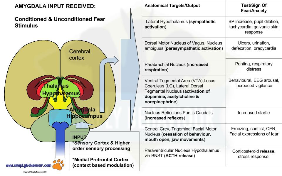 corticosteroids effects on growth