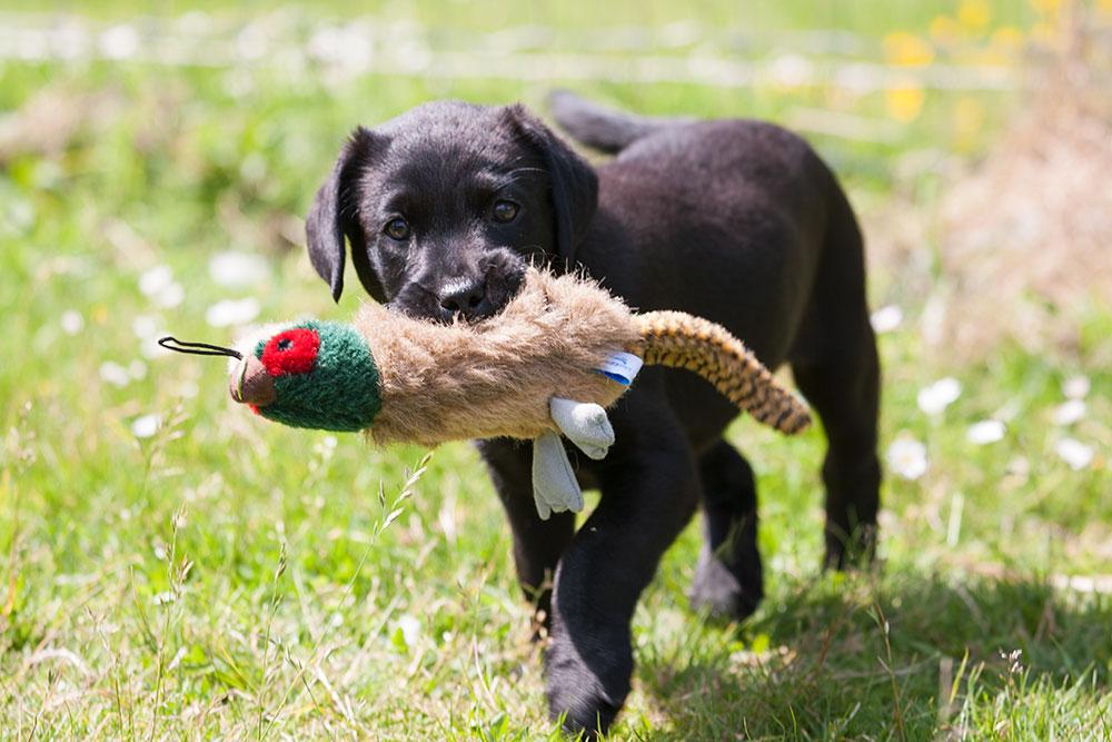 Accredited Dog Training Courses